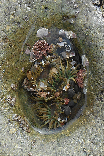 Sea Creatures Collection