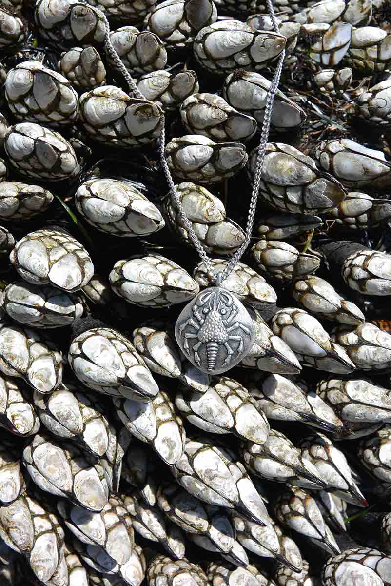 Goose barnacles in a tide pool at Cabrillo Point in San Diego, California provide backdrop to a cast 925 silver crab intended for the Sea Creatures Collection of jewelry by Kamila Kubelik.