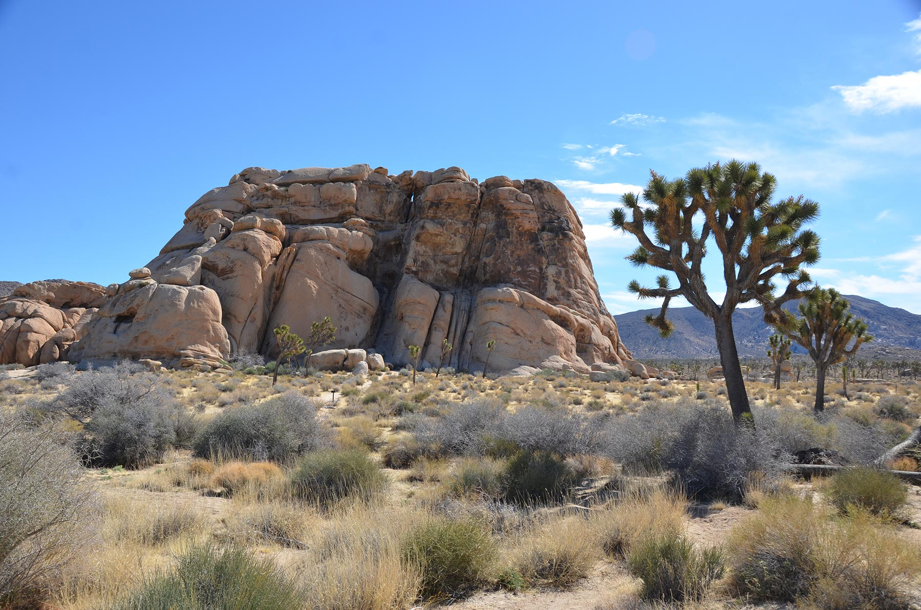 Lone Joshua Trees in front of Cyclops Rock, Joshua Tree National Park, Mojave Desert, California: many vistas in the American Southwest inspire the motifs in the synonymous jewelry collection by jewelry designer Kamila Kubelik.